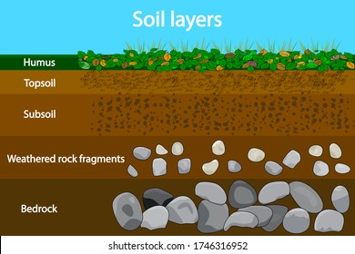 Soil layers. Diagram showing soil layers. Soil layer scheme with grass and earth texture and stones. Cross section of humus or organic and underground soil layers beneath. Geology infographics. Vector