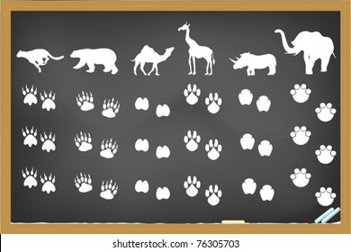 some animals footprints drawing on blackboard