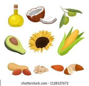 Source of edible oil set, coconut, avocado, sunflower, corncob, peanut, almond, sesame, olive vector Illustrations on a white background