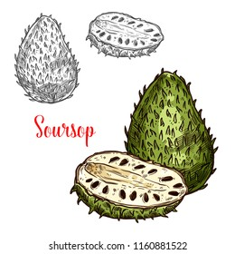 Soursop exotic fruit vector sketch. Botanical design of tropical custard apple, guanabana or graviola of Annona muricata fruit plant for juice, food or farmer market and agriculture design