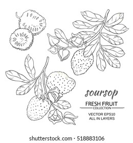 soursop vector set