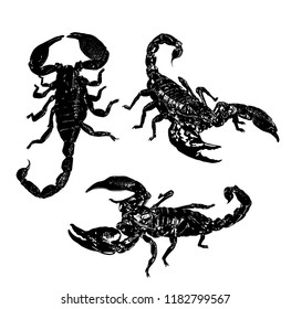 south arthropods scorpions