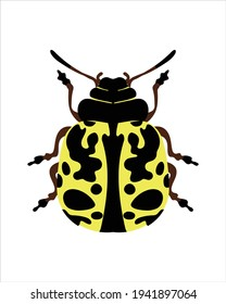 southern ladybird. flat vector illustration of bugs. insects and garden concept animated in colorful theme. cartoon illustration of nature isolated on white background.