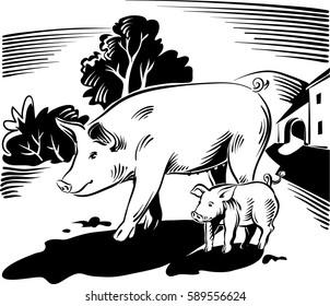 Sow with piglet who walks free in the vicinity of a farm.