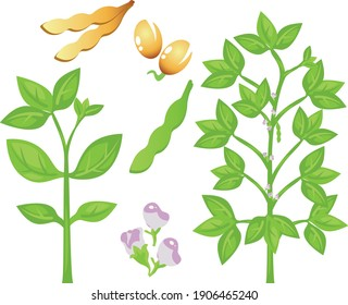 Soy phases. Pod, seed, plant, flower of soy. Flat Illustration.