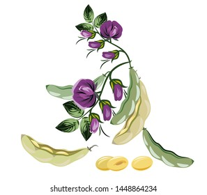 Soybean bush with flowers and pea pods