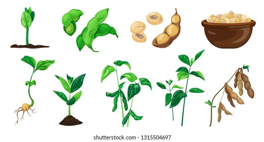 Soybean icons set. Cartoon set of soybean vector icons for web design