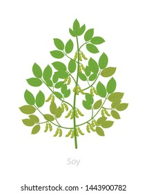 Soybean plant. Soya bean. Glycine max. Plant with leaves and pods of beans.