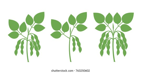 Soybean silhouette. Isolated soybean on white background