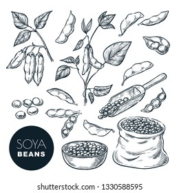 Soybean sketch vector illustration. Soya beens, pod on green plant and seeds in sack. Hand drawn isolated design elements.