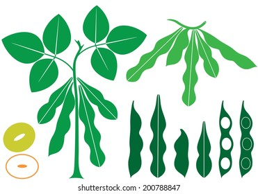 Soybean vector. Isolated soubean on white background. EPS 10. Vector illustration