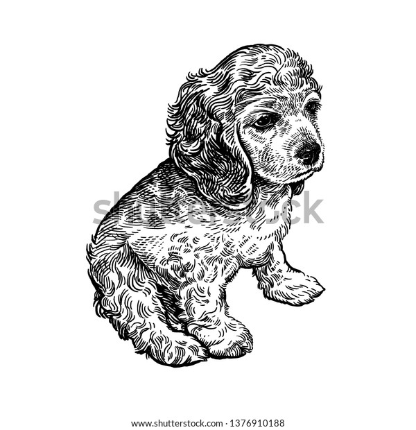 Spaniel Cute Puppy Home Pet Isolated Stock Vector (Royalty