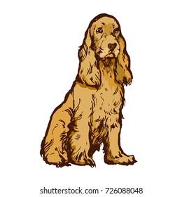 Spaniel dog stock vector illustration on white background