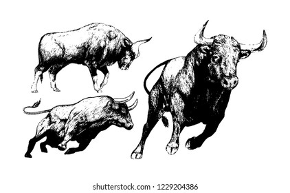 Spanish Fighting Bull ,sketch of a bull, Toro, animal illustration,freehand sketch illustration a set of bull, hand drawn illustration of bull on white background