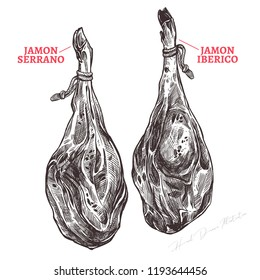 Spanish jamon iberico and serrano, hand drawn sketch illustration. Meat product or farm pork engraving vector