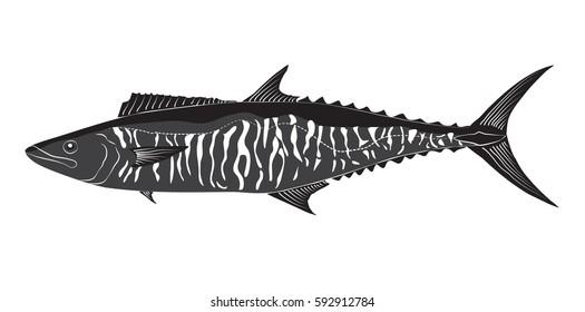 Spanish Mackerel Scomberomorus commerson illustration