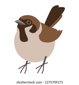 sparrow bird , vector illustration , flat style , front view
