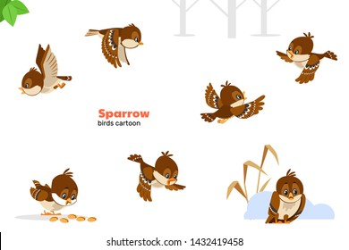 Sparrow. Birds cartoon. Set of cute sparrows character different poses in modern simple flat style. Isolated vector illustration on a white background.