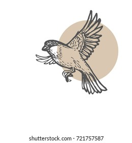Sparrow birds sketch background. Hand drawn painting illustration. Line art vector drawing. Eps-8
