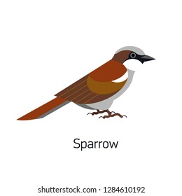Sparrow isolated on white background. Cute small passerine synanthrope bird. Funny birdie. Adorable urban animal, avian species. Modern colorful vector illustration in trendy flat geometric style.