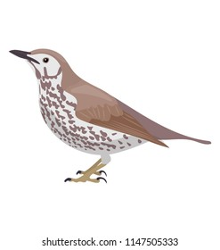 Sparrow like bird in  brown color depicting wood thrush