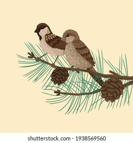 Sparrows, brown and gray plumage bird, sits on brunch with needles and cones. Vector drawing cartoon illustration on background.