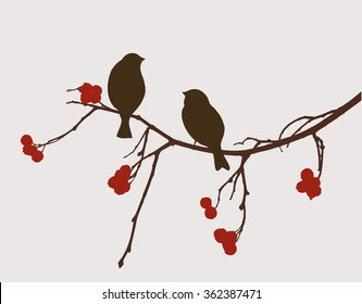 sparrows on the mountain ash branch