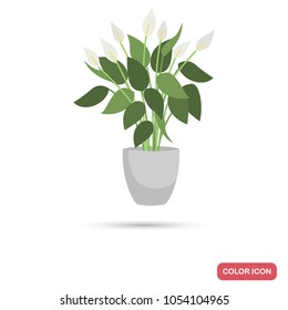 Spathiphyllum, f homeplant color flat icon