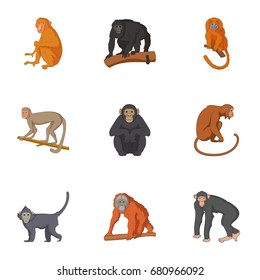 Species of chimpanzee icons set. Cartoon set of 9 species of chimpanzee vector icons for web isolated on white background