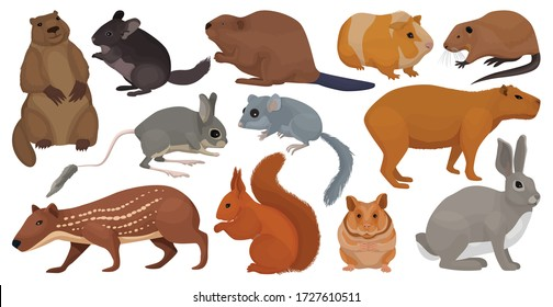 Species of rodents vector cartoon set icon. Isolated cartoon set icon gnawer.Vector illustration species of rodents on white background.