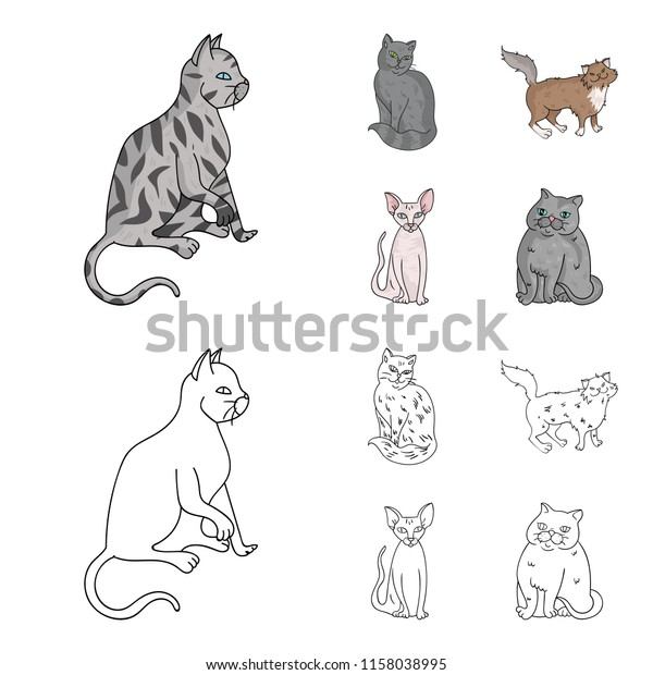 Norwegian Forest Cat Kitten Black Cat Clip Art - Norwegian Forest Cat  Kitten Black Cat Clip Art - Free Transparent PNG Clipart Images Download