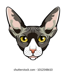 Sphynx, Cat face cartoon flat icon design. Vector illlustration.