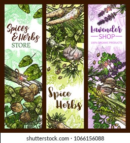 Spice and herb banner with green leaf vegetable, seed and plant root. Basil, rosemary and thyme, mint, bay and garlic, dill, parsley and nutmeg, coriander, lemongrass and poppy, celery and lavender