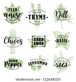 Spice and herb hand drawn lettering with fresh food condiment sketch. Pepper, star anise and cinnamon, cardamom, basil and dill, thyme, sage and chives for organic spice shop packaging label design