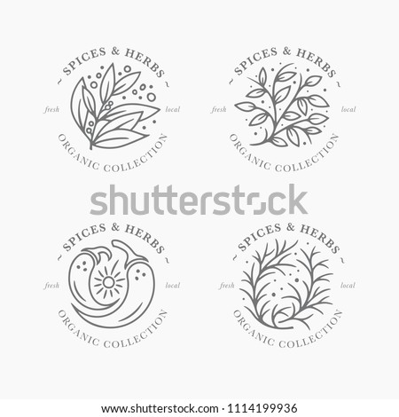 spice herb label collection black white stock vector royalty free