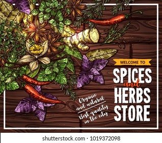 Spice and herb poster of seasoning on wooden background. Rosemary, thyme, chilli pepper and basil, ginger, vanilla and star anise, bay leaf and dill sketches for spice shop welcoming banner design