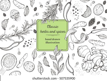 Spice and herbs top view frame. Vintage hand drawn sketch vector illustration. White background. Vector Design template.