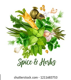 Spice and herbs, vector. Bunch of green leaf, seed, flower and roots of culinary greenery. Basil, rosemary and mint, garlic, parsley and green onion, dill, coriander and celery, horseradish and poppy