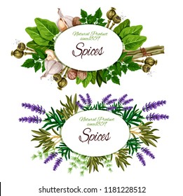 Spice label with culinary herb, vegetable seasoning and condiment. Rosemary, parsley and dill, nutmeg, garlic and lemongrass, sage, sorrel and marjoram, lavender flower and poppy seed. Vector ill