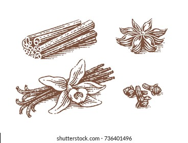 Spice. Vanilla, anise, cinnamon and clove. Hand drawn engraving style illustrations.