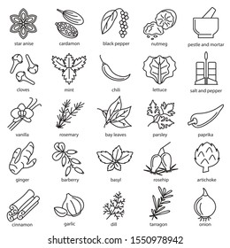 Spices Condiments Sign Black Thin Line Icon Set Include of Rosemary, Basil, Ginger and Parsley. Vector illustration of Icons