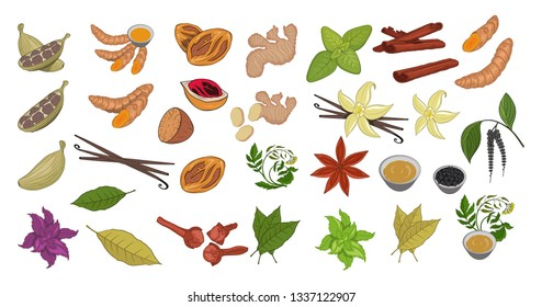 Spices, flavoring set, vector set, hand-drawn spices and ingredients, seasonings for food, spice and herbs, flavoring set, flavoring for food, flavor with spice