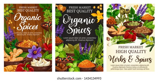 Spices and green herbs vector poster of organic vegetable seasonings. Chilli pepper, vanilla and cinnamon, ginger, garlic and parsley, rosemary, thyme and anise, olives, basil and bay leaf condiments