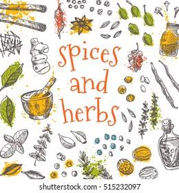 Spices and herbs card. Hand drawn vector illustration. Watercolor splashes. Cinnamon, pepper, cardamon, ginger, basil, capers, thyme, oregano, barberry, juniper, saffron, coriander, vanilla, bay leaf