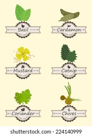 Spices And Herbs Colorful Retro Label Set vector illustration