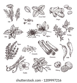 Spices and herbs. Hand drawn ginger and chilli pepper, saffron and vanilla. Sketch spices vector collection