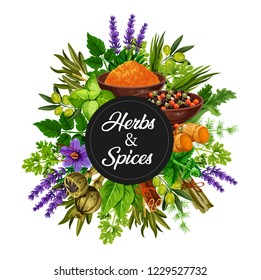 Spices and herbs organic seasonings and cooking flavorings bunch. Vector olives, chicory and lavender, vanilla and cinnamon, lemongrass or ginger, leek and pepper with turmeric or curry in bowl