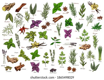 Spices, herbs, seasonings vector ginger, cinnamon and bay leaves, dill, rosemary or sage. Tarragon, basil and chili, peppermint, thyme with oregano. Lavender, cardamon and vanilla herbal ingredients