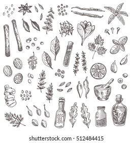 Spices and herbs set. Hand drawn vector illustration. Cinnamon, pepper, cardamon, ginger, basil, capers, thyme, oregano, barberry, dill, juniper, saffron, coriander, vanilla, chili, bay leaf and other