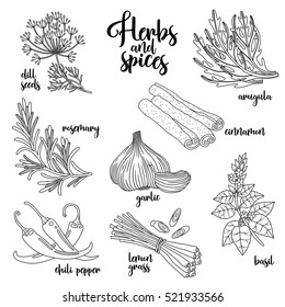 Spices and herbs vector set to prepare delicious healthy food. Contour botanical illustration on white background with dill seed, rosemary, chili pepper, arugula, garlic, cinnamon, basil, lemongrass.